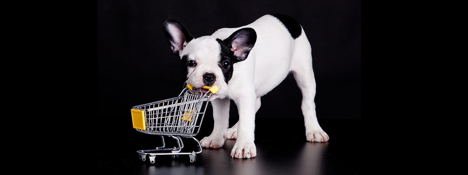 French bulldog playing with a miniature shopping cart