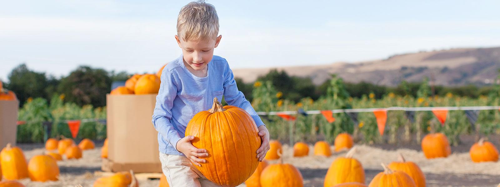 A child in a pumpkin patch